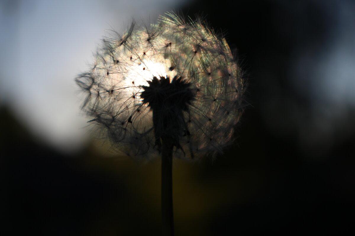 на закате - Валентина