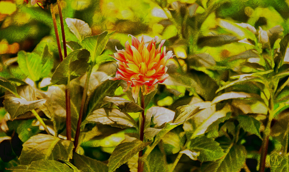 Цветок садовый - Анатолий Чикчирный