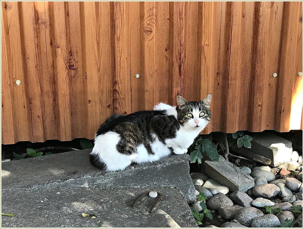 Зеленоградский кот. - Валерия Комова