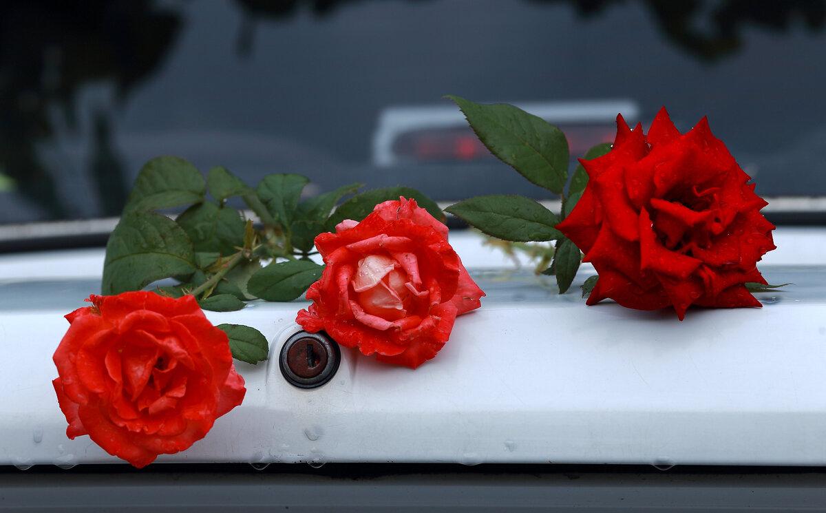 Розы на машине - просто Борисыч