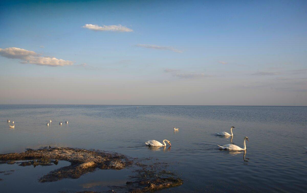 Лебеди на Черном море - Александр Довгий