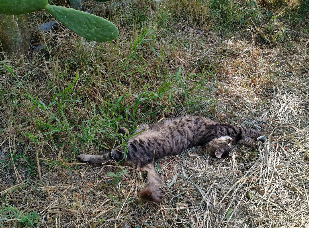 Котик серый спит - Александр Деревяшкин