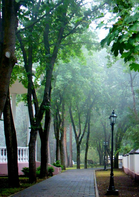 Туманная  аллея  парка - Евгений БРИГ и невич