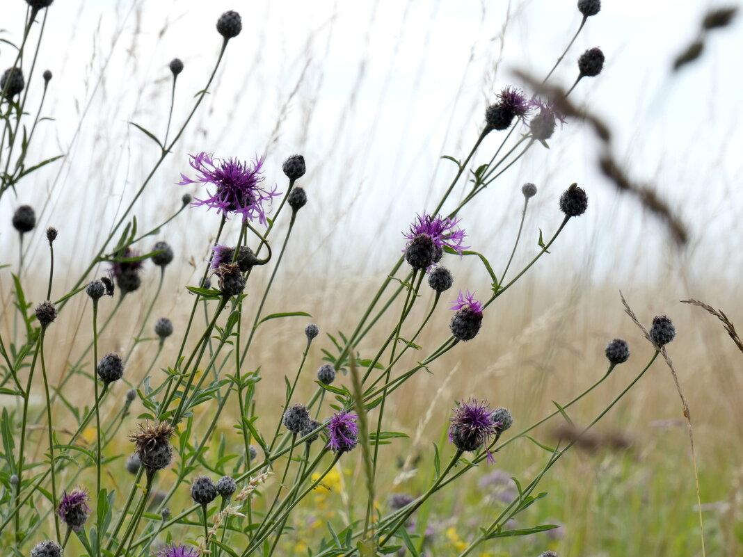 Цветочный Луг, Пчелиное Пастбище - Heinz Thorns