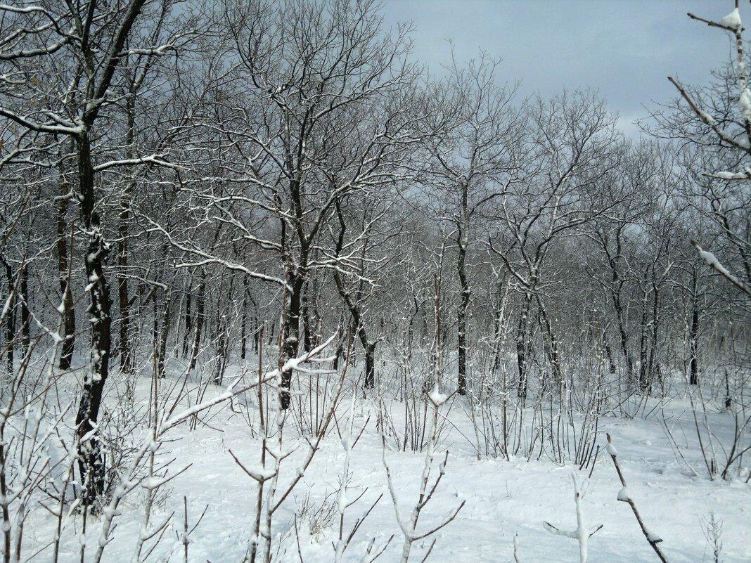 Шахты. Мартовский снегопад в лесу микрорайона ХБК. - Пётр Чернега