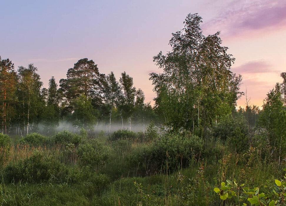 Ранним утром. - Pavel Vasilev