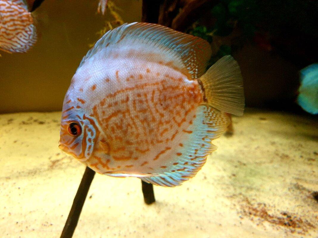 Рыбка - Елена П