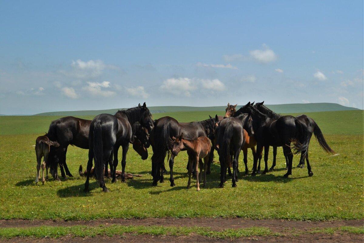На лугу пасутся кони.... - Клара