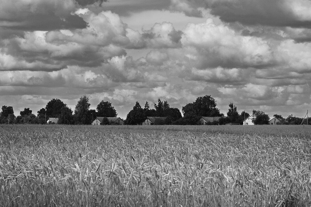 Пшеничная деревня перед грозой - M Marikfoto