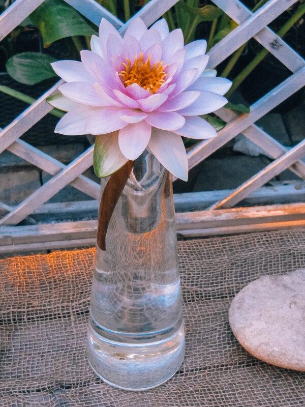 Люблю цветы - Виктория Чурилова