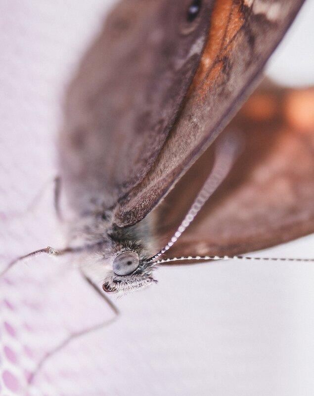 Бабочка крылышками бякбякбякбяк - Helga Sergeenko