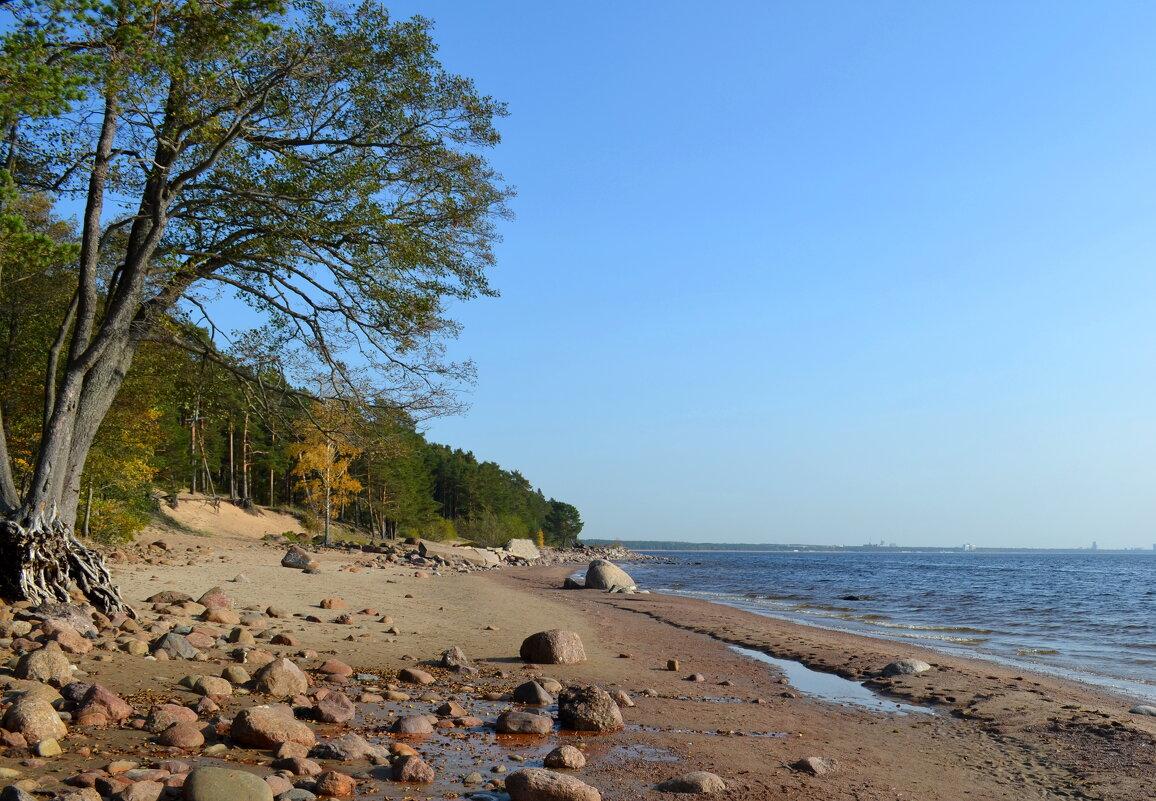 Дюны и залив - Олег Николаев
