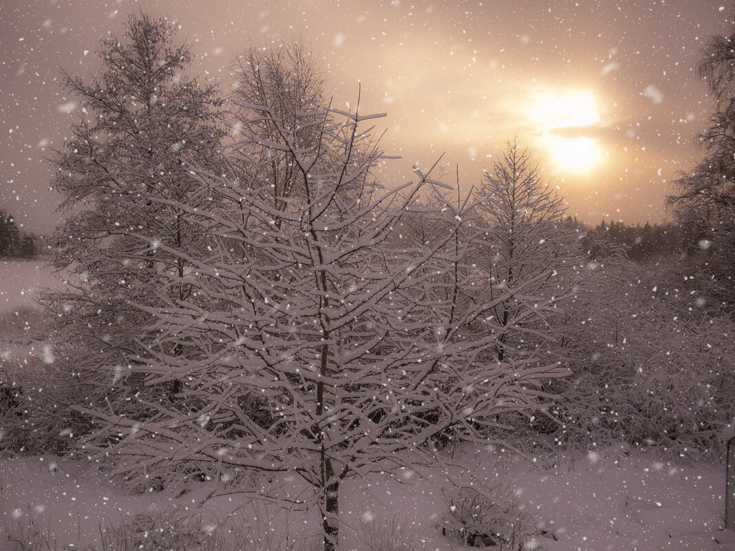 Немного солнца в снежный день - liudmila drake