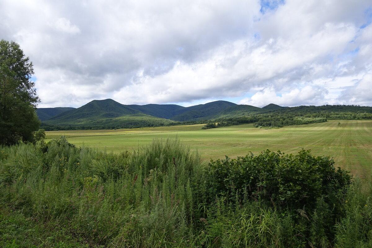 Красивое поле в северо-восточной части Приморского края. - Алексей Спиченко