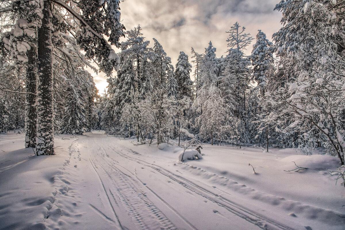 Замороженный лес - Vladimbormotov
