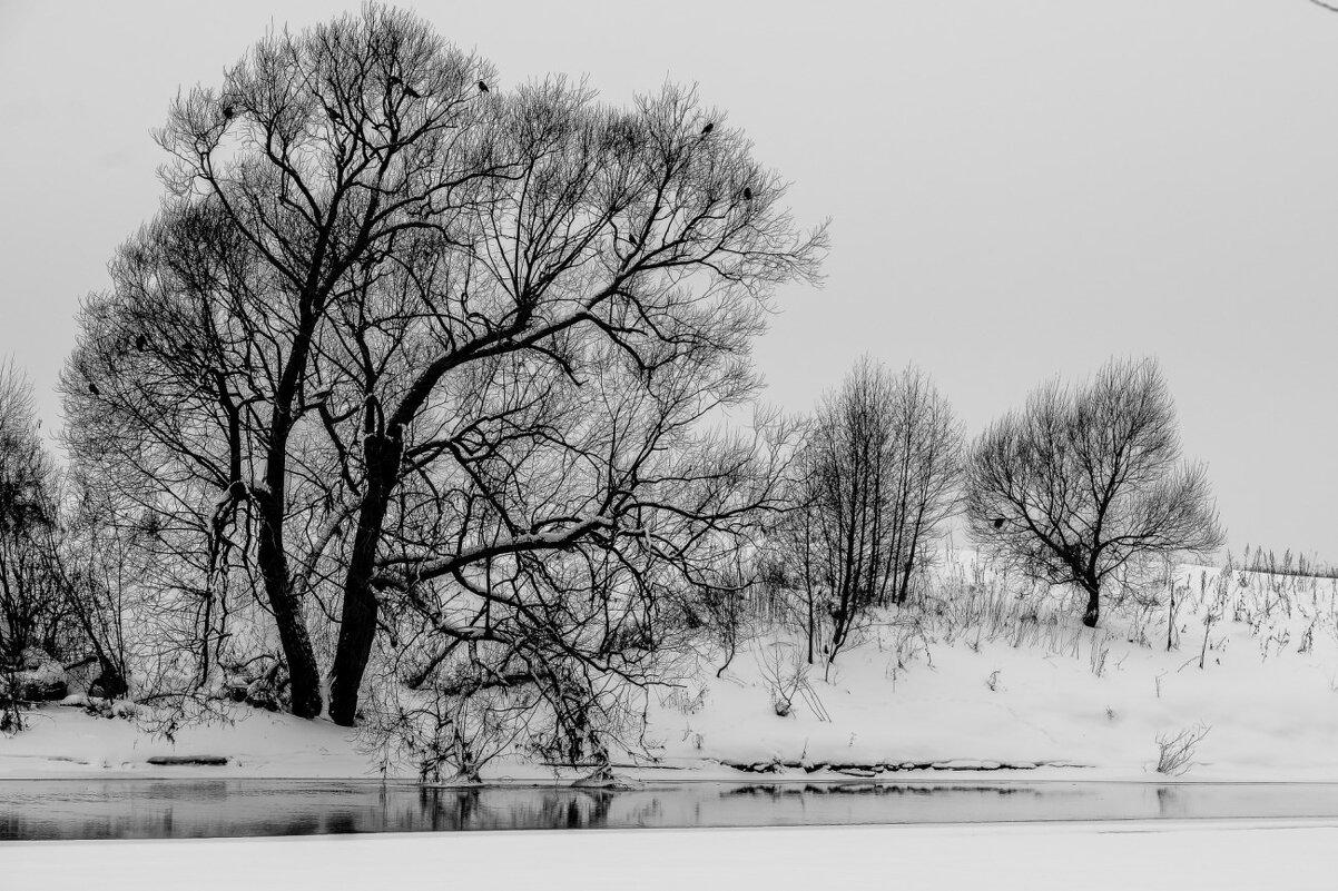 жизнь дерева у берега реки - Георгий А