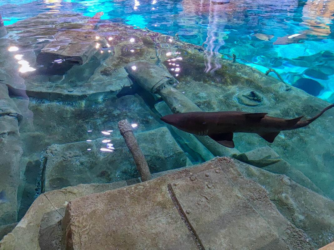 акула - жанна janna