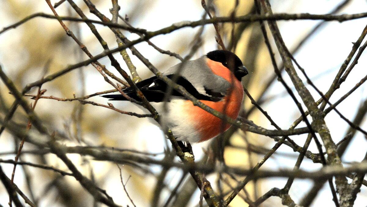 Птицы на дереве - 2 - Сергей