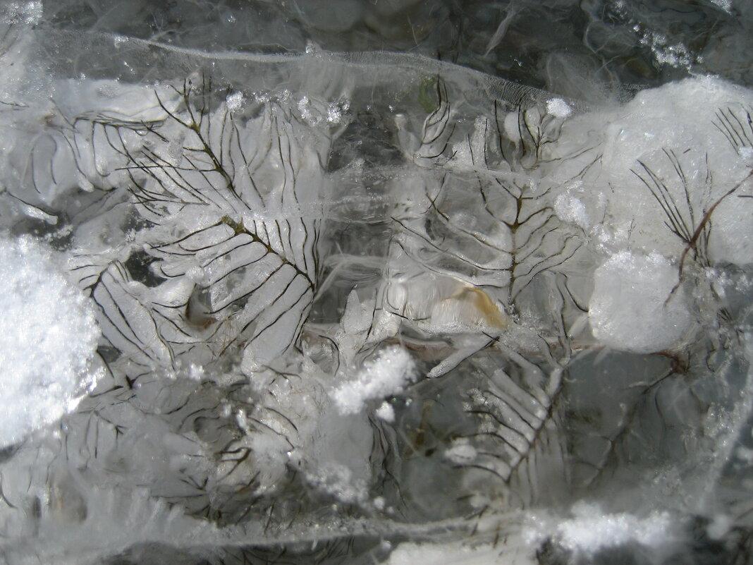 Ледниковый период - Anna Ivanova