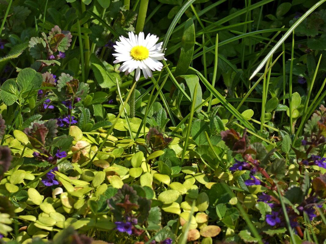 Луг в саду - Heinz Thorns