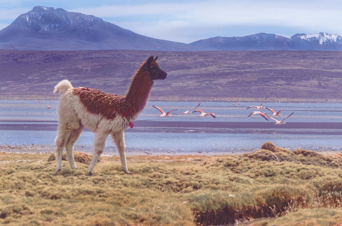 Перу. Национальный заповедник Салинас и Агуада Бланка (белая вода). - Svetlana Galvez