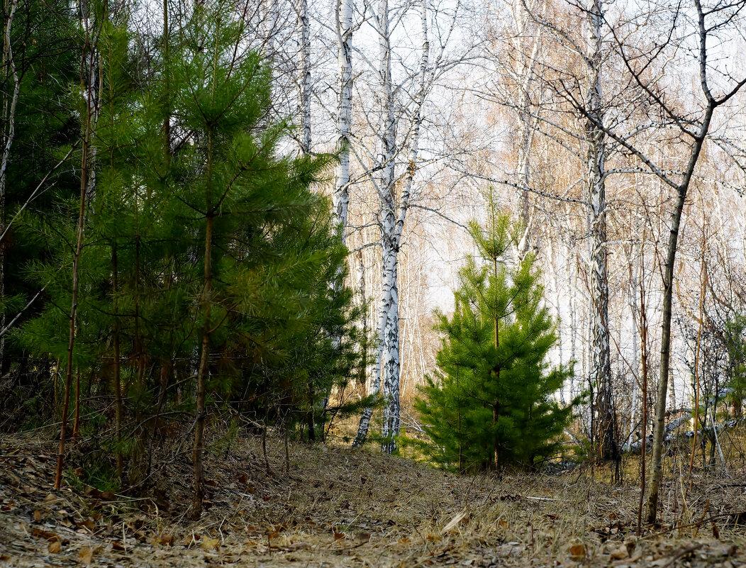 В лесу родились ёлочки - Сергей Царёв