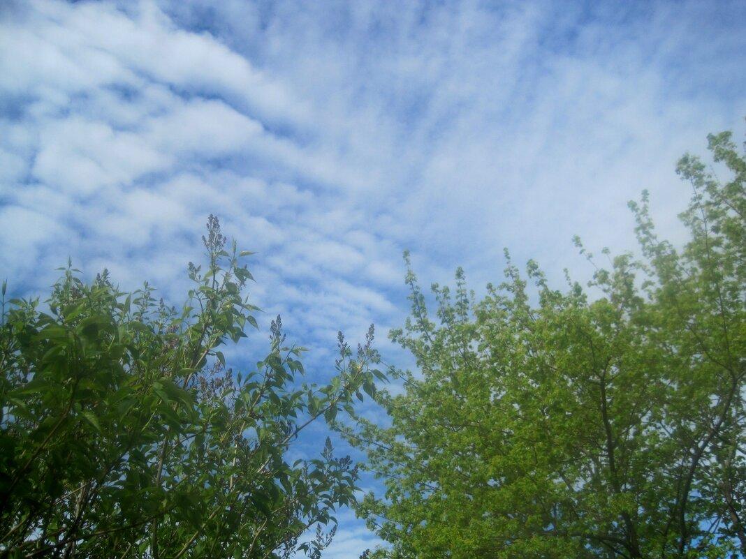 Весеннее небо - Елена Семигина