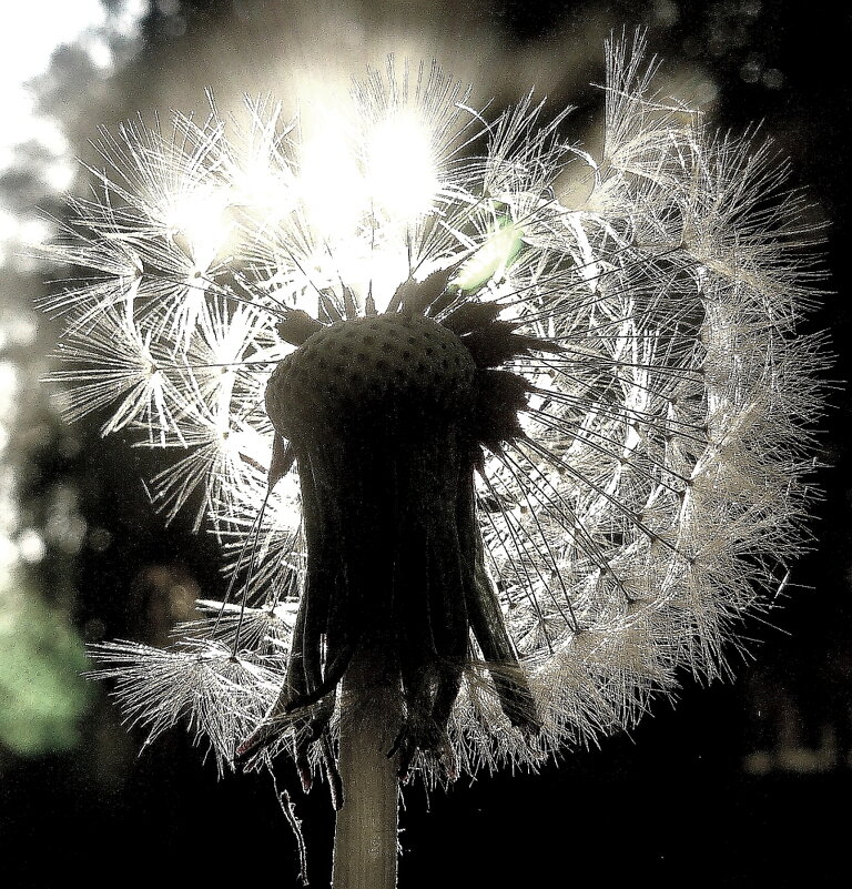 Любимый цветок - олег свирский