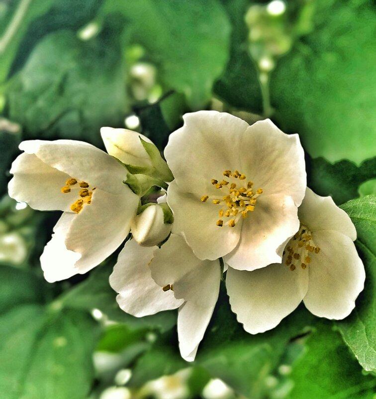 Цветок дня - Ольга Винницкая (Olenka)