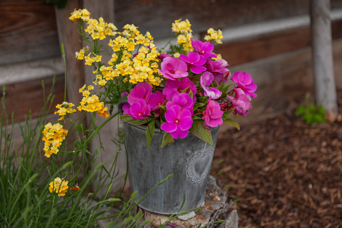 цветы - vladimir