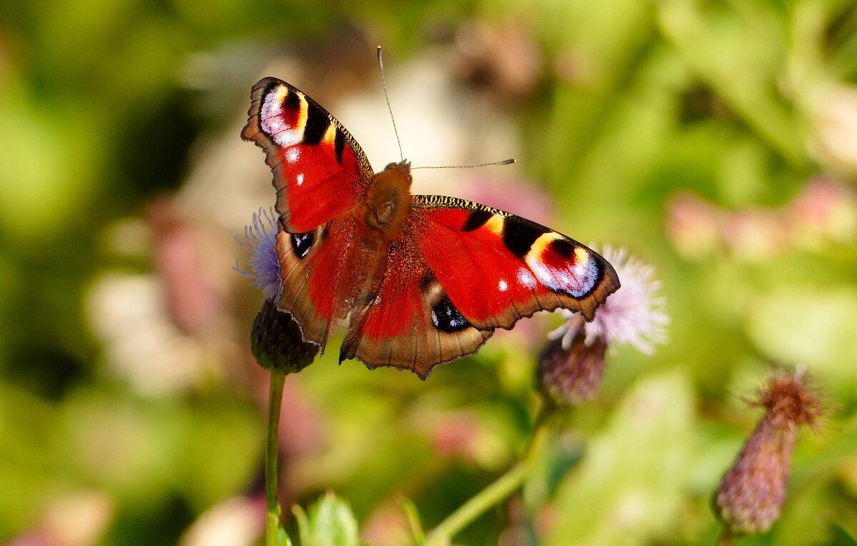 бабочки сентября 19 - Александр Прокудин