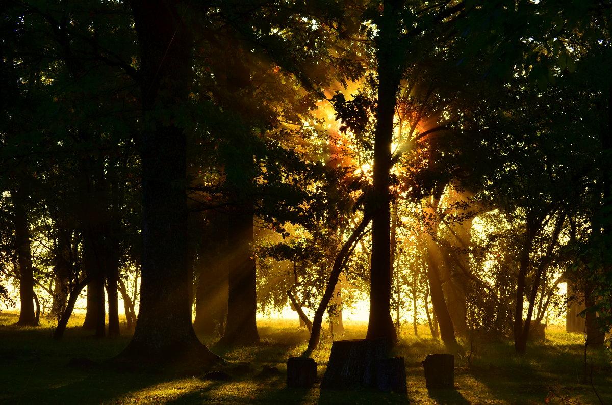 утренний туман - Laimis S