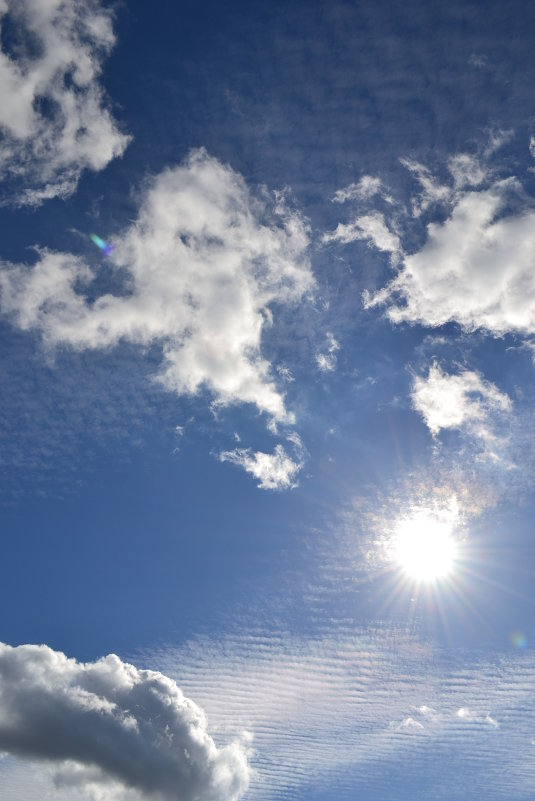 Холодне сонце - Сливка Вікторія