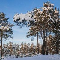 Зима :: Yuri Silin