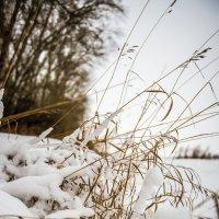 зима :: Юрий Ульянов