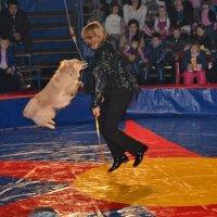 цирк Шапито :: Светлана