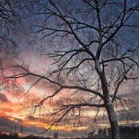 Зимний закат :: Валентина Писаревская