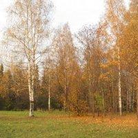 Золотая осень :: Ольга Михеева