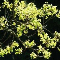 Весна пришла! :: Александр Петров