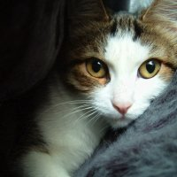 Кошка :: Mariya Chereshnovskaya