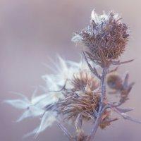 Зимние сны лета :: Ирина Лядова