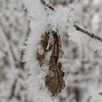 Зимние узоры :: Валерий Шибаев