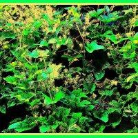 Буйство цветения :: Владимир Хатмулин