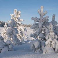 В декабре все деревья в серебре :: Владимир Тюменцев