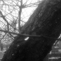 после дождя 3 :: Юлия Закопайло