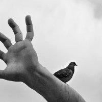 Рукой он к небу все тянулся, она ж решила отдохнуть... :: Valeriy(Валерий) Сергиенко