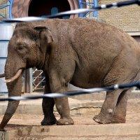 У слонов свой отсчёт времени... :: Борис Русаков