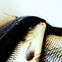Рыбный день :: sv.kaschuk