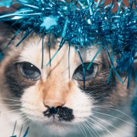 Ладно..уговорили,буду Снегурочкой на Новый Год... :: Nataliya Belova