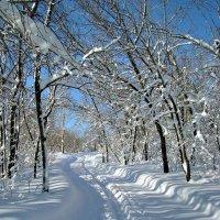 по первому снегу :: Андрей ЕВСЕЕВ